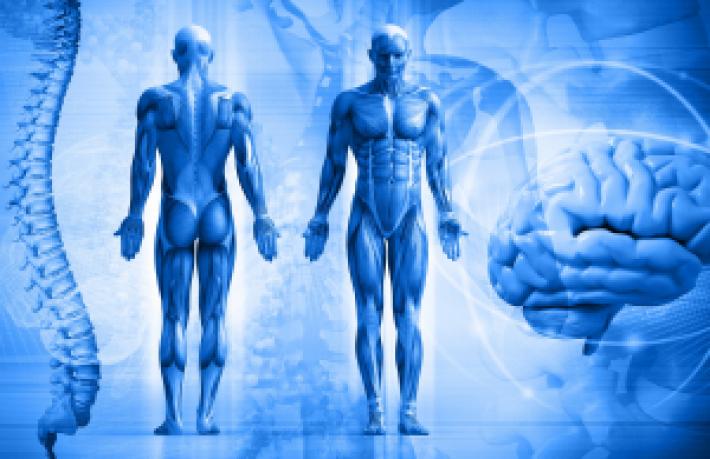 Студенты колледжа – победители международной олимпиады по анатомии физиологии человека